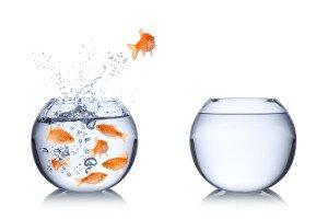 Herausforderungskonzept mit Fischen